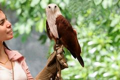 Hawk sitting on falconer's  woman hand Stock Images