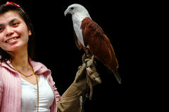 Hawk sitting on falconer's  woman hand Royalty Free Stock Photo