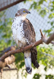 Hawk Stock Photos