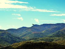 Hawk Soaring over Tree Covered Mountain Range Stock Image