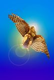 The hawk-thief of a sunlight Royalty Free Stock Image