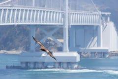 Hawk At Tokushima Bridge Imagens de Stock
