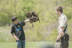 Hawk and trainer Stock Photos