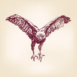 Hawk - vector illustration Royalty Free Stock Photography