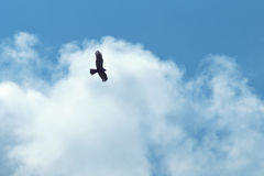 Hawk on white clouds Royalty Free Stock Photos