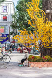 A hawker ( saleswoman ) selling tobacco ( cigarette ) is sitting at the downtown of Saigon Vietnam on Lunar New year. Royalty Free Stock Photography