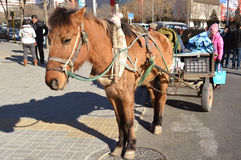 Horse dragging. A horse drag the tricycle for selling goods in Beijing of china Stock Photos