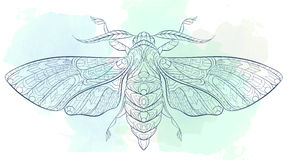 Hawkmoth. Patterned moth on the grunge background Stock Image