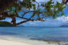 Tropical Caribbean beach with tree St. John, USVI Royalty Free Stock Photos