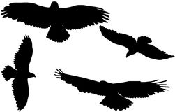Hawks in silhouette Stock Photography