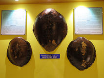 Hawksbill żółwia skorupa Zdjęcia Stock