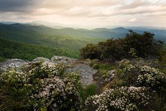 Hawksbill в цветени Стоковые Изображения