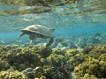 The Hawksbill  Stock Images