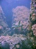 Hawksbill Schildkröte Stockbild