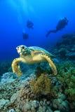 Hawksbill Schildkröte und Taucher Lizenzfreies Stockbild