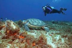 Hawksbill Schildkröte und Unterwasseratemgerät-Taucher Stockfotos