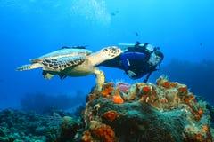 Hawksbill Schildkröte (Eretmochelys imbricata) und Taucher Lizenzfreies Stockbild