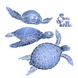 Hawksbill sea turtle collection Stock Photography