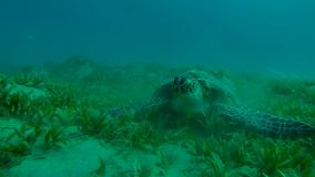 Hawksbill turtle from all sides slow motion stock footage