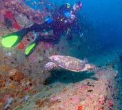 The Hawksbill Turtle (Eretmochelys imbricata) near Corals. Maldives stock photos