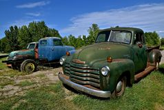 Old Chevy pickups. HAWLEY, MINNESOTA, August 22, 2017: The old pickups from the 40`s or 50`s, are Chevrolets, colloquially referred to as Chevy and formally the Stock Image