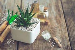 Haworthia sukulent w kwiatu garnku, mini ogrodowych narzędziach i homeopatycznych remediach dla rośliny, fotografia stock