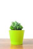 Haworthia in un vaso verde Fotografie Stock Libere da Diritti