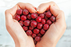 Haws in heart shap hands Stock Photos