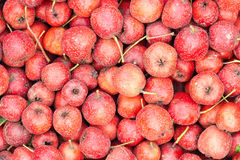 Hawthorn. The background of fresh hawthorn fruits Royalty Free Stock Image