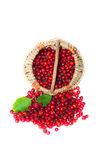Hawthorn in a basket Royalty Free Stock Photography
