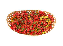 Hawthorn berries Royalty Free Stock Photos