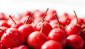 Hawthorn berries Stock Photo