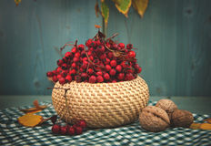 Hawthorn berries in a basket Royalty Free Stock Image