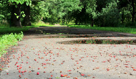 Hawthorn berries on the ground Stock Images