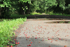 Hawthorn berries on the ground Royalty Free Stock Photos