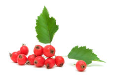 Hawthorn berries on white background Stock Photography