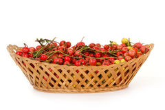 Hawthorn berries in a wicker basket Stock Photography