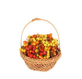 Hawthorn berries in a wicker basket Stock Photos