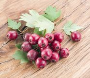 Hawthorn berries on the wood. Stock Photography