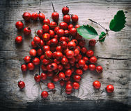 Hawthorn berries on a wooden background Stock Images