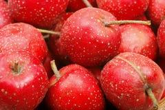 Hawthorn berry Stock Photos