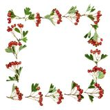 Hawthorn Berry Border royalty free stock images
