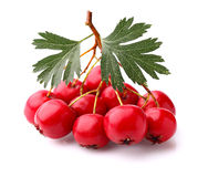 Hawthorn berry with leaves Stock Image