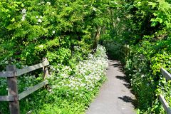 Hawthorn blossom public path Royalty Free Stock Photos