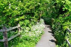 Hawthorn blossom public path Royalty Free Stock Photos