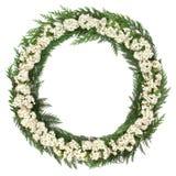 Hawthorn Blossom Wreath Stock Image