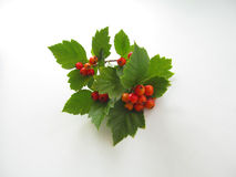 Hawthorn. Branch with berries on a white background Royalty Free Stock Images