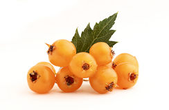 Hawthorn branch of orange. Royalty Free Stock Photography