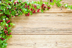 Hawthorn at bright planks Royalty Free Stock Photo