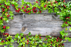 Hawthorn at dark planks Stock Photo